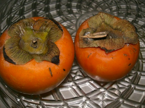 lotus persimmon