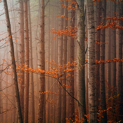 Red trees (Evgeni Dinev) Tags: autumn trees fog forest square bulgaria   naturesfinest  rhodopes   naturepoetry