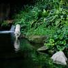 Dip (NowJustNic) Tags: plant reflection pool rock zoo waterfall pond nikon singapore ripple tiger bigcat vegetation dip whitetiger singapura pantheratigris d80 nikkor18135mm