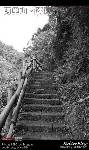 你拍攝的 20081115數位攝影_阿里山之旅041.jpg。