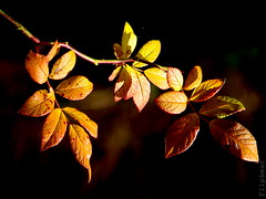 Anticipation (flipkeat) Tags: autumn friends fall nature leaves outdoors interesting branch colours different unique canadian explore karma portcredit naturesfinest wonderworld supershot abigfave anawesomeshot thenaturegroup overtheexcellence theperfectphotographer photoexplore thebestofday gnneniyisi naturethroughthelens dsch50 vosplusbellesphotos naturescreations