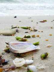 Seaside, Somerton (Murfomurf) Tags: sea shells beach water sand gulf australia adelaide buds 100 somerton