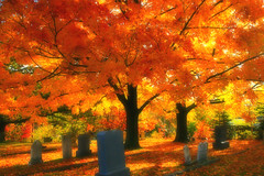 golden tree (ddk4runner) Tags: autumn copyright tree fall nature leaves gold golden cemetary maine newengland graves allrightsreserved stripedmaple ddk4runner abigfave donnakerley donnakerley ddk4runner ddkstudio