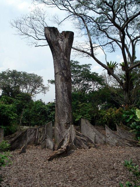 Dead tree rising