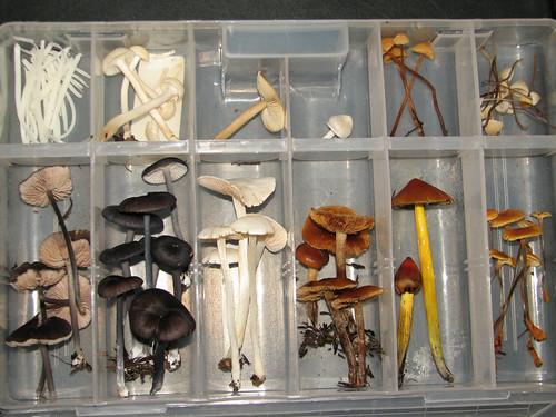 Nhu's mushroom box
