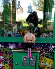 Valerie wants to catch Siberian Husky!