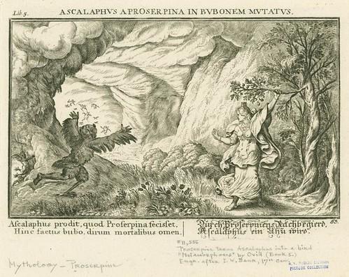ascalaphus a proserpina in bubonem mutatus