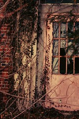 pretend (stephanie marie sarah) Tags: door old pink reflection abandoned broken hospital reflecting cool interesting scary vines ancient play sad antique no memories center growth age depression illegal aged playtime destroyed entry trespassing psychiatric psychology pretend schizophrenia