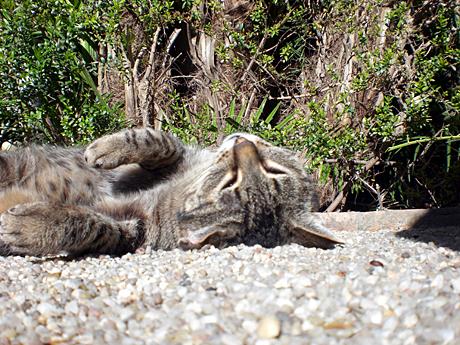 botanic-valencia-cat