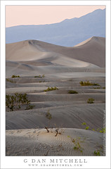 Stovepipe Dunes, Evening (G Dan Mitchell) Tags: california travel light plants usa mountains landscape evening nationalpark twilight sand soft waves desert dunes stock scenic wells deathvalley ripples folds grapevine stovepipe induro gdanmitchell