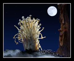 Midnight in the enchanted forest (Bald Monk) Tags: food tree robert night forest mushrooms photography photographer bald monk rob spooky enchanted tunstall