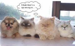 LOL CATS THREAD