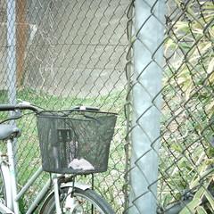 【写真】ミニデジで撮影した自転車
