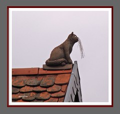 Katze auf dem Dach - cat on the roof
