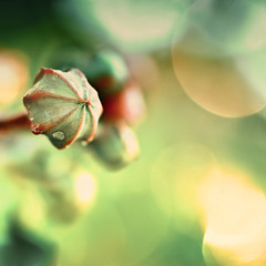 Dazzle me (imago2007 (BUSY)) Tags: macro green nature canon photography virginia bravo bokeh v rebelxt dazzle redgreen virgie 50mmmacro hbw the99 pinoykodakero imago2007 worldwideopen bokehwednesday