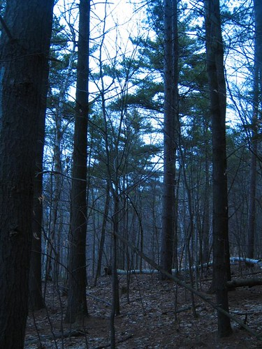 Muted twilight colors in the forest