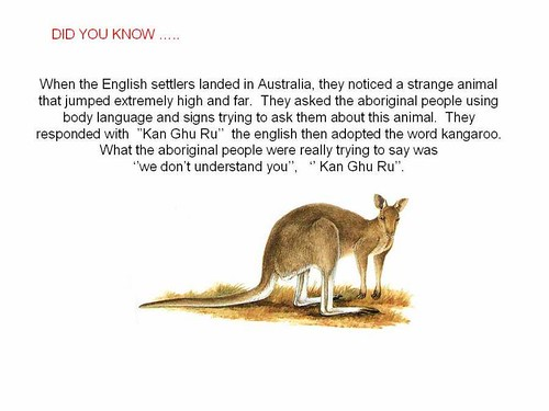 interesting facts  kangaroo
