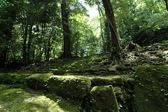 more steps (the mayan loved their steps) (suttonhoo) Tags: archaeology mesoamerica ruins maya guatemala mayan ruinas piedrasnegras mayansite