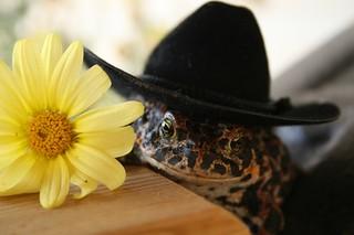 Cowboy comes a courtin'
