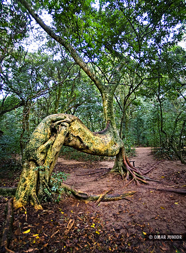 Árvore Cavalo   Tree Horse