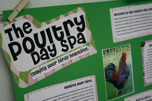The Poultry Day Spa