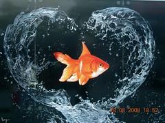 Corazón de pez (darkside_1) Tags: madrid españa fish pez heart anuncio corazón regalo balay zaragoza2008 sergiozurinaga bydarkside tucorazón