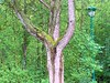 Lampadaire Voyeur (ConradG Photo-illusionnistE) Tags: tree jardin vision root arbre symbole racine lordofthering surnaturel