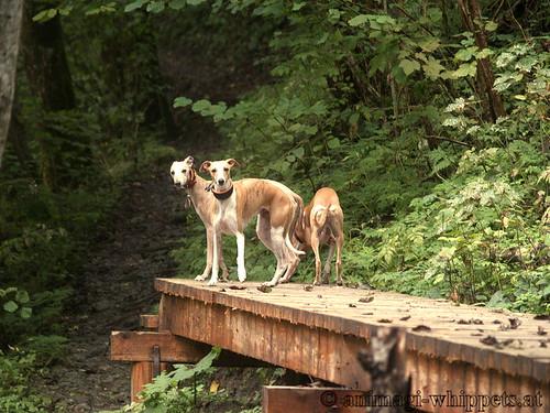 Coco, Nisha & Annie