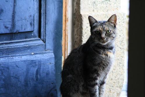 Beggar Cat