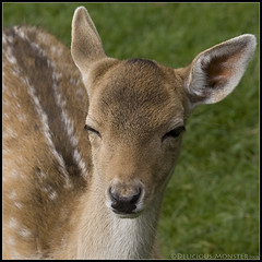 Winking Bambi (by Delicious Monster)