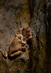 Frog Love (Suzanne AZICIT) Tags: arizona sports river grandcanyon photographers rafting coloradoriver occupations garyladd photocontesttnc08