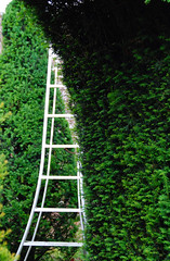 Keeping the Hedges in Trim at Penshurst Place (antonychammond) Tags: england gardens kent britain elite ladder 1001nights hedges rhizome historichouse penshurstplace abigfave saveearth estremit theperfectphotographer goldstaraward landscapesdreams rubyphotographer flickrsmasterpieces
