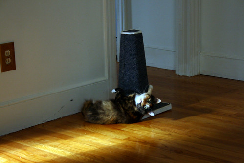 Cali the Calico Cat Works the Scratching Post - IMG_9759