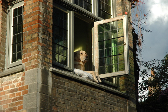 Dog watching Brugges canal 2