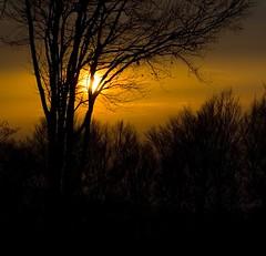 Aomori Sunset (paradoxbox) Tags: sunset orange sun color colour beautiful silhouette japan nikon d2x pollution aomori hakkoda  glowing incredible  hakkouda