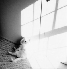 Whisper (christiaan_25) Tags: light shadow blackandwhite bw white cat angles sunbeam whitecat blackandwhitecat blackwhitephotos theinspirationtree 1stplacef2fchallenge flickryourphotos