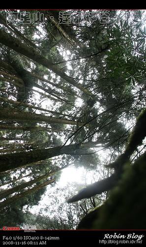 你拍攝的 20081116數位攝影_阿里山之旅053.jpg。