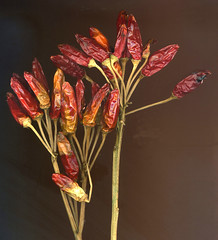 Peperoncino (Pier Paolo . Lampis) Tags: rosso peperoncino vegetali qualitypixels naturescreations thecelebrationoflife