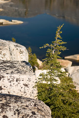 Tree and tonalite (brookpeterson) Tags: twinlakes sierras desolationwilderness