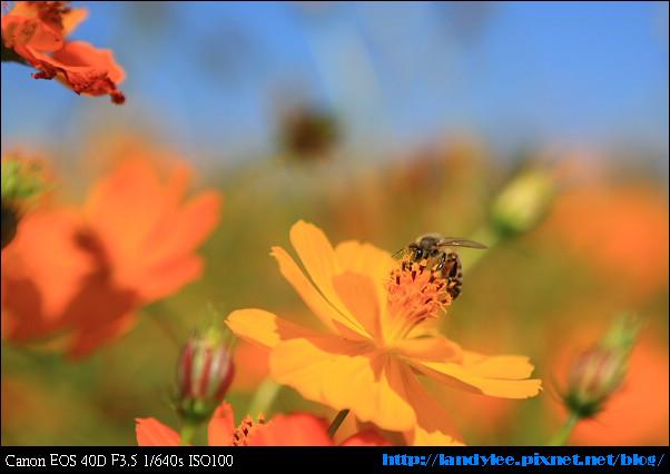 9711-新社花海:Date with Bee_084.jpg