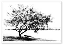 Bleak Afternoon by the River (Barbara J H) Tags: bw tree river bench seat australia qld picnicpoint maroochydore maroochyriver barbarajh countdownto2009yourdiary