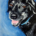 pet portrait swap for Cary Snyder