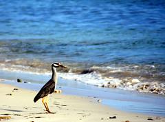 ..and the sea (xeno(x)) Tags: blue sea macro bird art beach nature america canon cuba 2008 caribe xeno bej 40d mywinners avianexcellence overtheexcellence