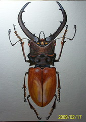 Beetle a Day (GunnerGirl) Tags: art illustration bug painting insect paint journal beetle sketchbook draw acrylics entomology cyclommatus communitysketchbook