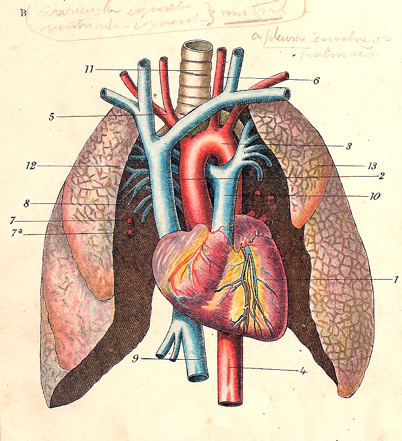 circulatori