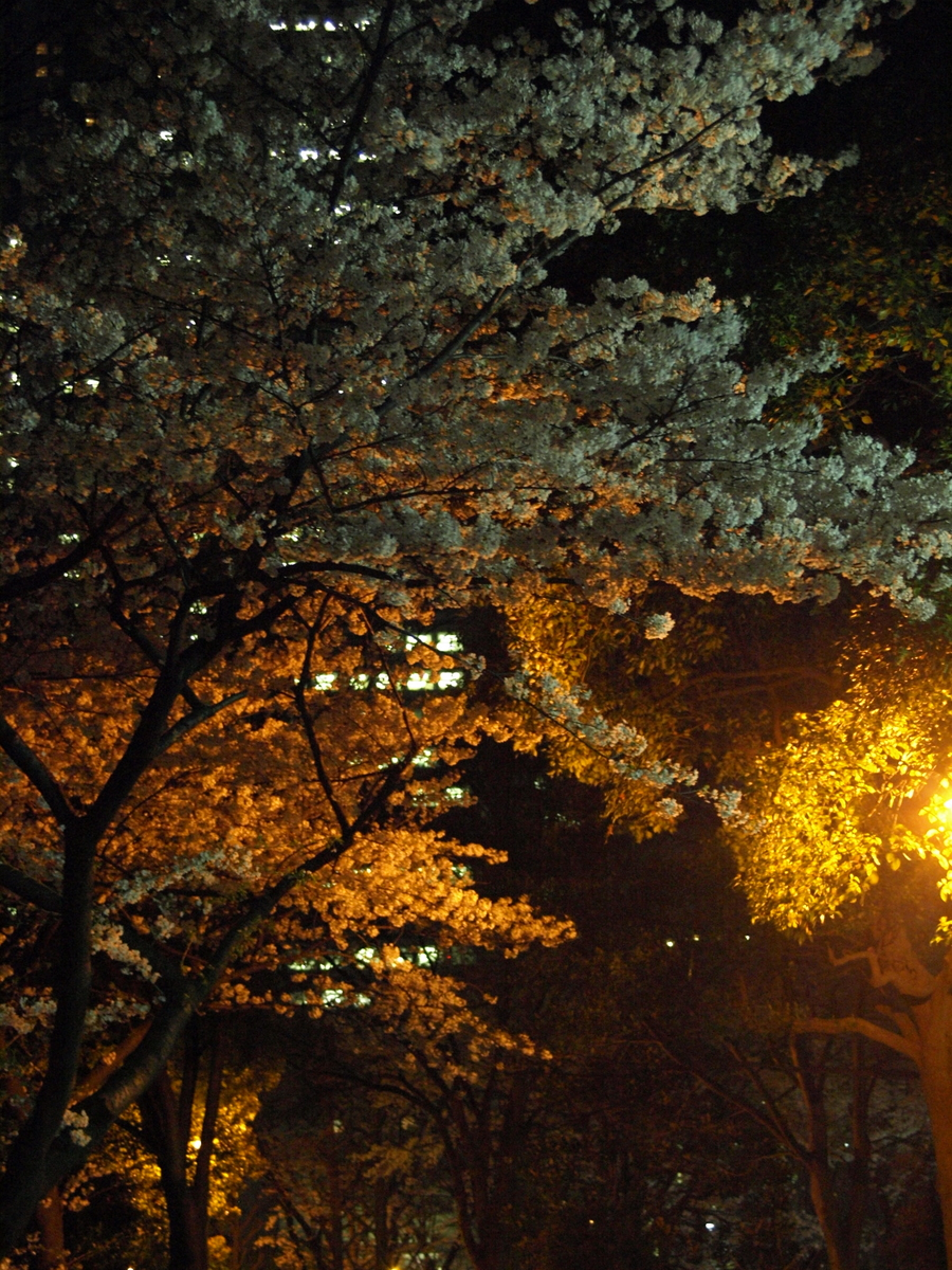 Night-Sakura in Shinjuku