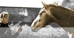 Attentif (nathaliehupin) Tags: horse cheval nikon alexia photographebruxelles nathaliehupin vistavie photographeluxembourg photographehainaut photographenamur photographeliege photographemons photographebelgique wwwnathaliehupinbe wwwnathaliehupingraphismebe