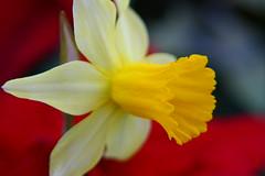 Glasgow Botanic Gardens 035