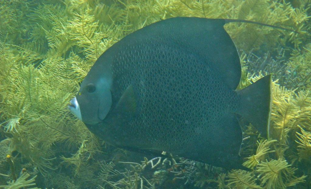 bajo el agua, cayo Coral
