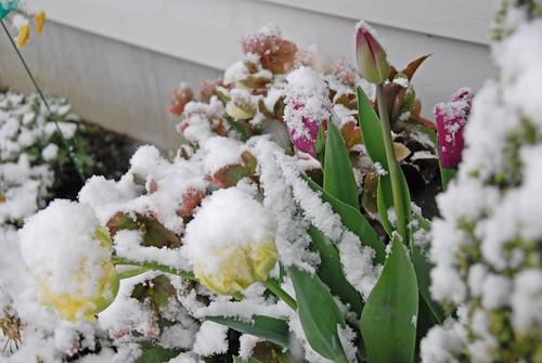 April snow 04